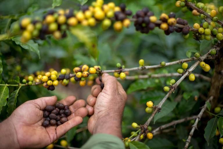Pequenos produtores investem em café especial