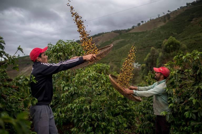 Produtores em plantação de café no Espírito Santo