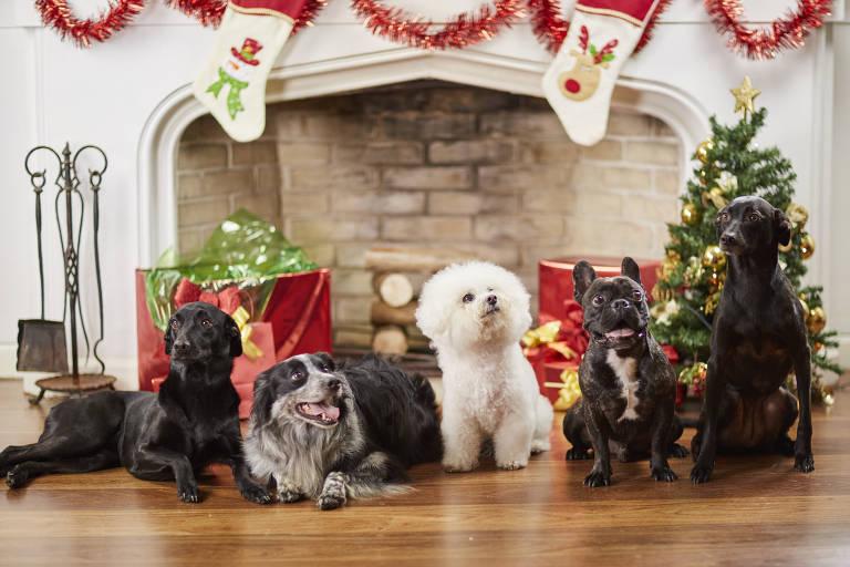 Pets 'modelos' fazem galeria de Natal