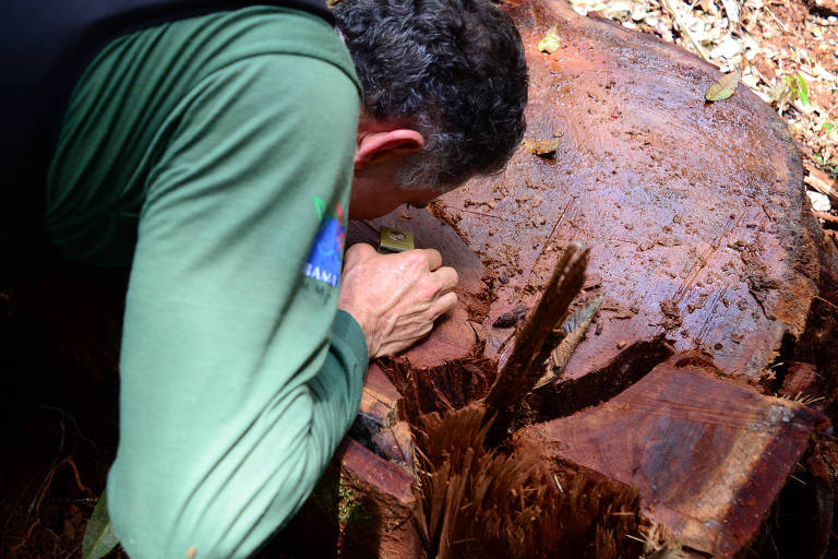 Após recurso do Ibama, Justiça fixa prazo de 60 dias para que MT se integre ao sistema nacional de madeira