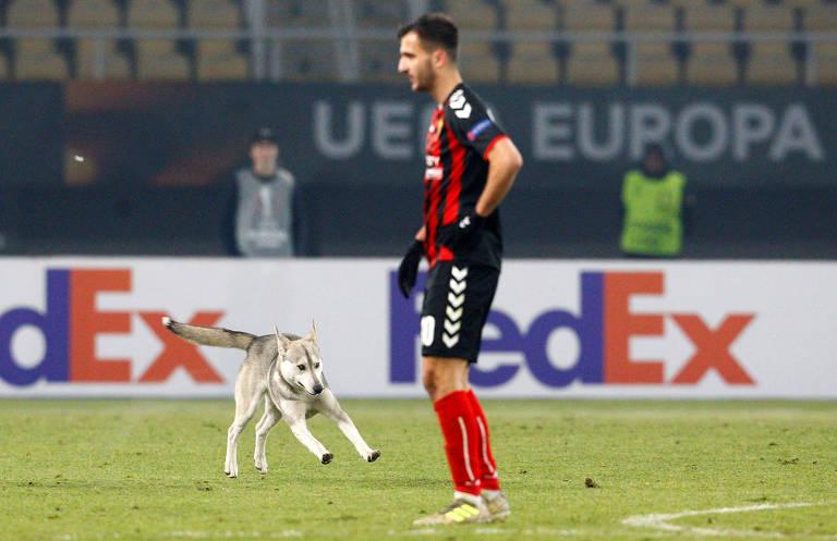 Cachorro invade campo e para jogo da Liga Europa