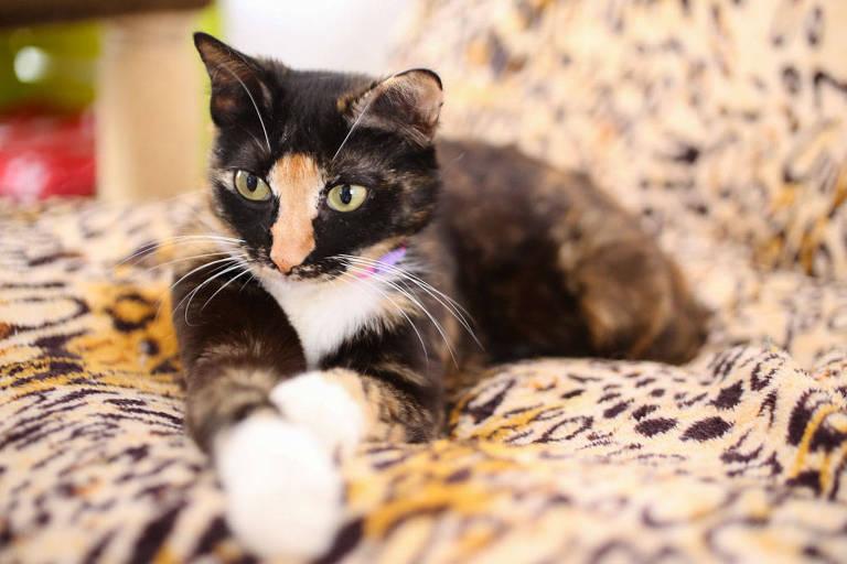 Gatinhos para adoção na ONG Catland