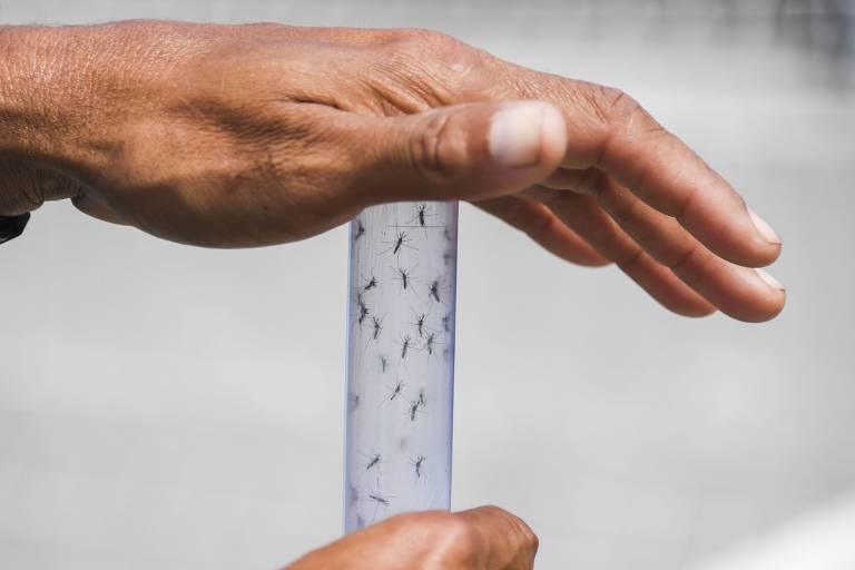 O surgimento de uma epidemia de dengue 3 é uma das preocupações para 2018