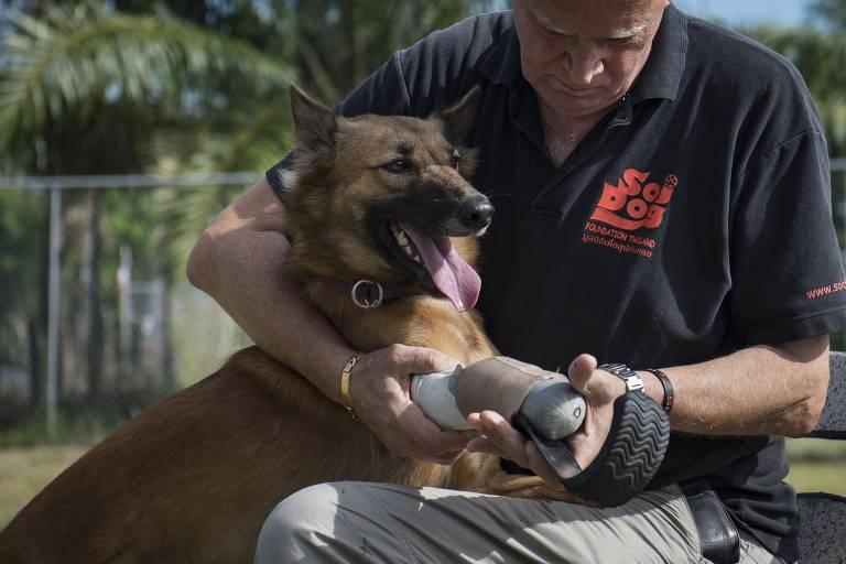 Cachorro ganha próteses como as de atletas paralímpicos