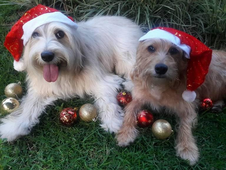 Cães se preparam para o Natal
