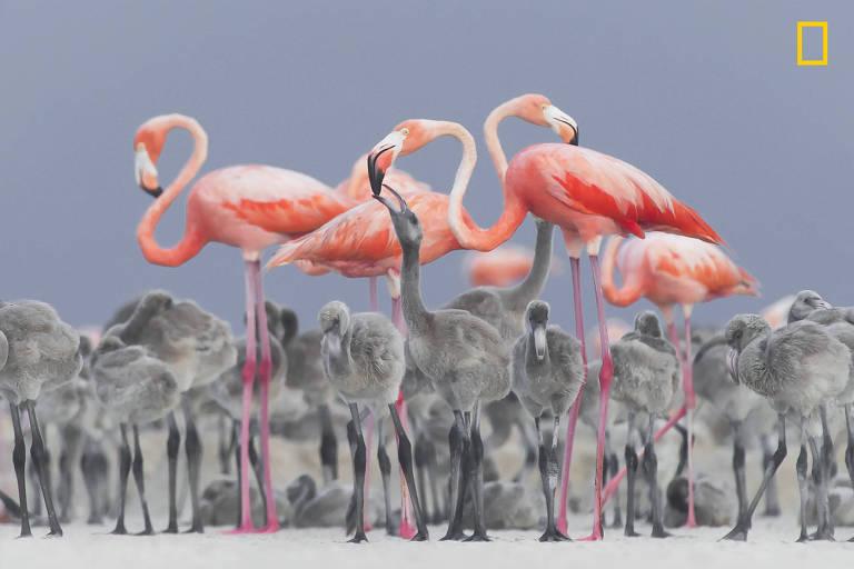 National Geographic anuncia melhores fotografias de natureza