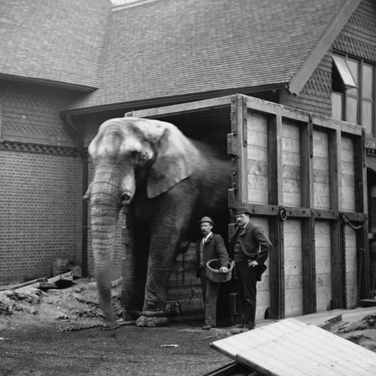 O cuidador de Jumbo, Matthew Scott, foi a única pessoa que conseguiu acalmar o elefante para embarcar no navio rumo aos Estados Unidos