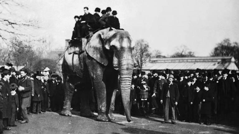 Jumbo, o elefante mais famoso do mundo
