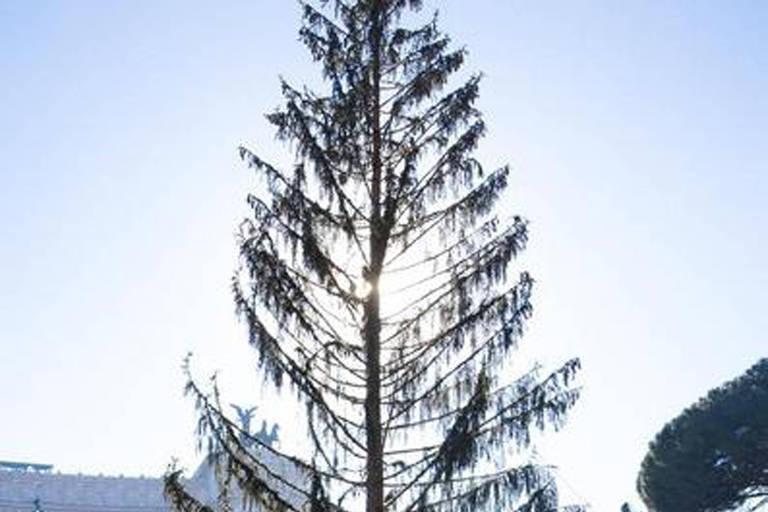 Árvore de Natal 'careca' vira piada em Roma