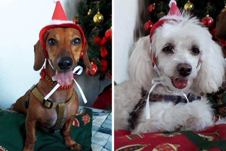 Natal dos pets