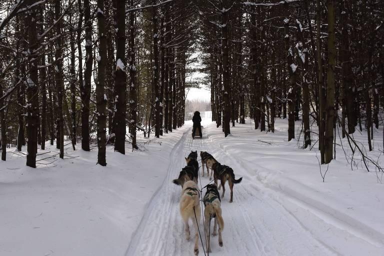 Trenós em floresta em Lanoraie, Québec, no Canadá