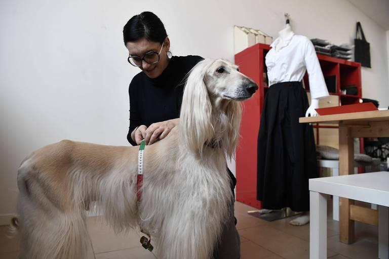 Uma estilista tira as medidas de um cão no ateliê de Giovanna Temellini, em Milão