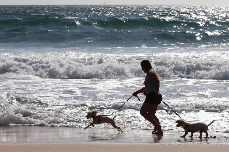 Cães na praia ou piscina