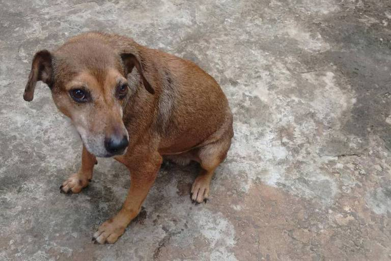 Pets com leishmaniose