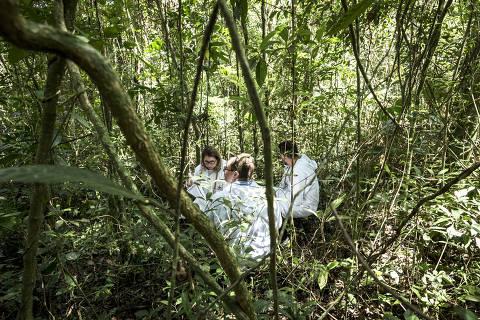 MAIRIPORÃ, SP, BRASIL, 18-01-2018, 14h00: Ação em área de mata em Mairiporã, com agentes de saúde do estado de São Paulo que procuram o mosquito transmissor da febre amarela. Eles usam armadilhas para atrair mosquitos, entre outras táticas, para recolher os insetos e enviar para análise laboratorial. Os mosquitos coletados são congelados em nitrogênio líquido ao final da coleta. (Foto: Rafael Roncato/Folhapress, COTIDIANO) ***EXCLUSIVO FOLHA****