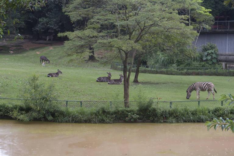 Zoológico e Jardim Botânico de São Paulo