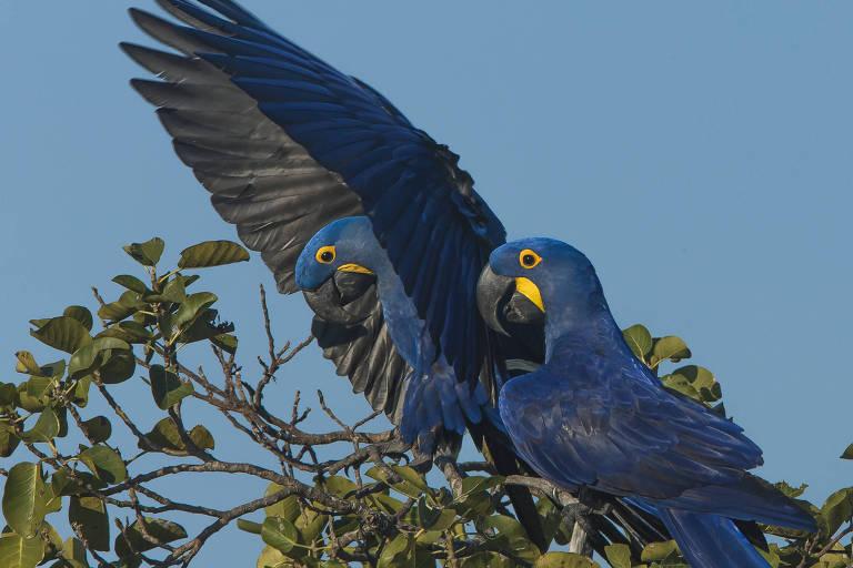 Viaja s�opaulo - Pantanal