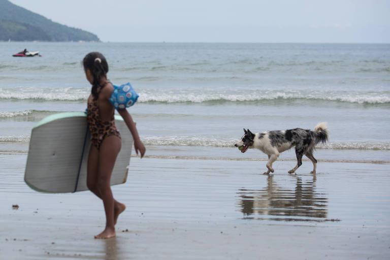 Cachorro na praia da Enseada em Ubatuba, no litoral norte de SP