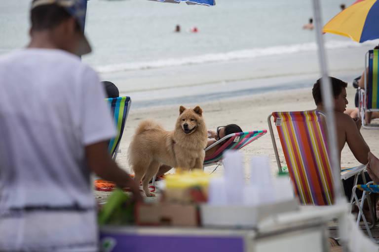 Cachorro na praia da Enseada em Ubatuba