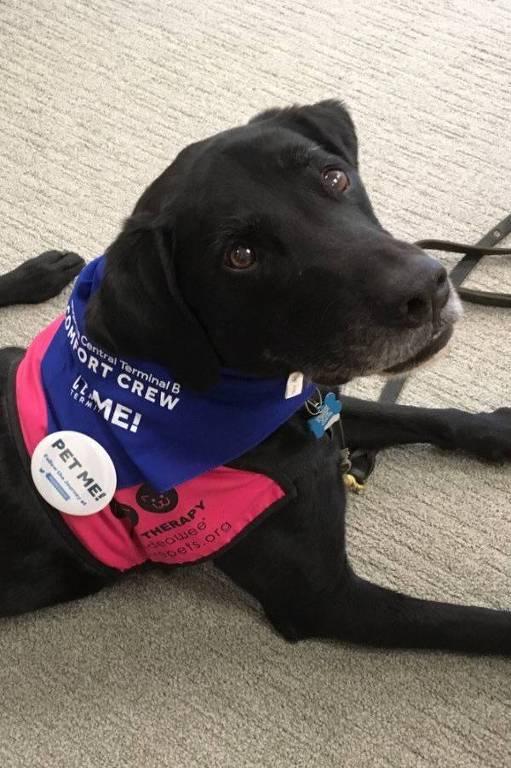Um dos cachorro usado para acalmar passageiros no aeroporto de LaGuardia, em Nova York