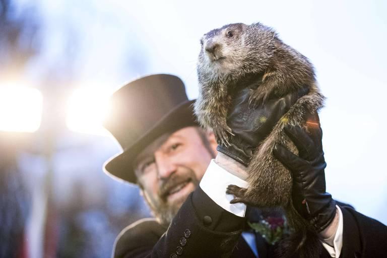 A marmota conhecida como Phil depois de fazer sua previsão em Punxsutawney, Pensilvânia (EUA)