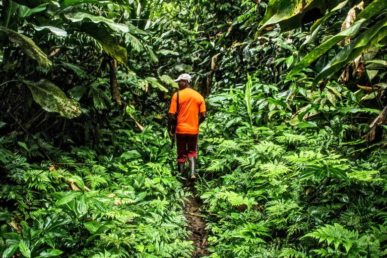 O ex-caçador Gentil, que se tornou guia turístico da empresa colombiana Awake Travel, durante expedição na floresta em Chocó, na Colômbia