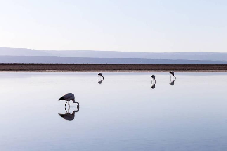 A laguna Chaxa ocupa quase toda a foto, sendo dividida do céu claro no horizonte por uma fina faixa de areia. A água está calma e rasa, e quatro flamingos bebem água nela, com os pés na água