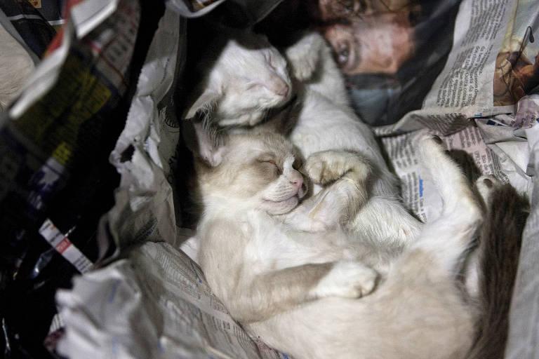 Cerca de 30 gatos e cachorros são encontrados mortos dentro de sacos de lixo na zona sul