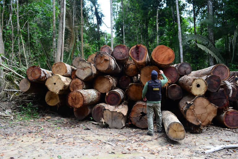 Resultado de imagem para exploração madeira