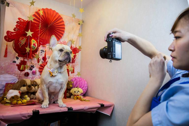 Ano do Cão na China