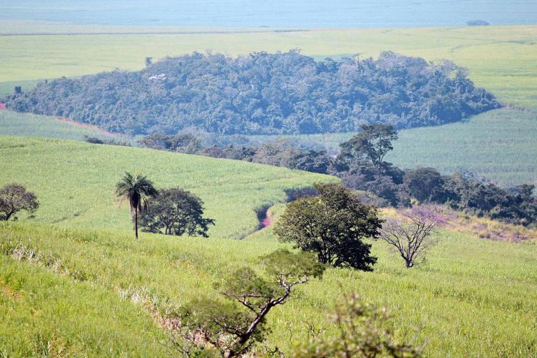 Reserva legal em fazenda no município de Batatais formada antes da aprovação do Código Florestal