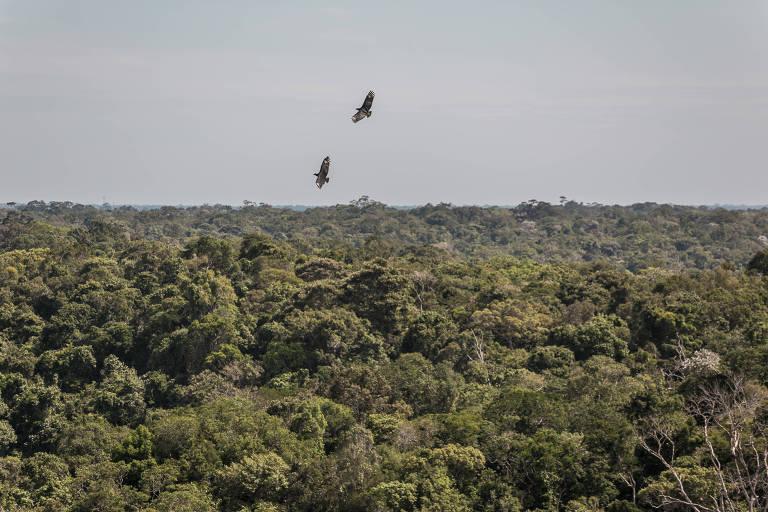 Pássaros voam no meio da Amazônia