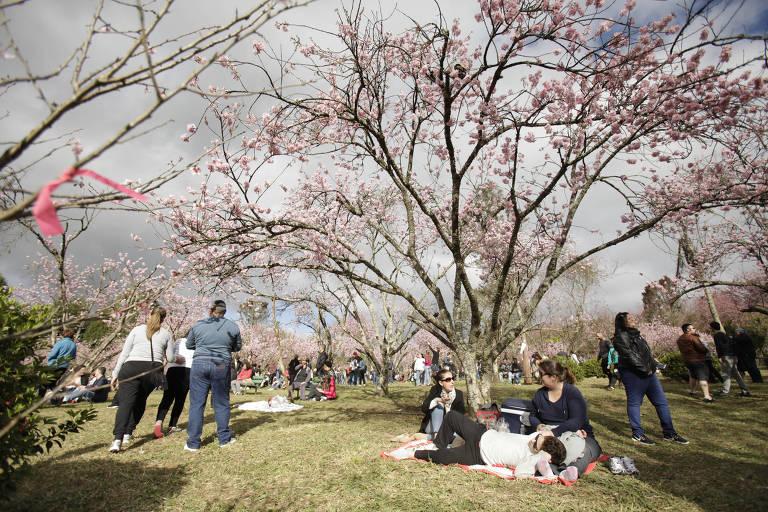 Parque do Carmo durante a festa das Cerejeiras, que acontece em agosto