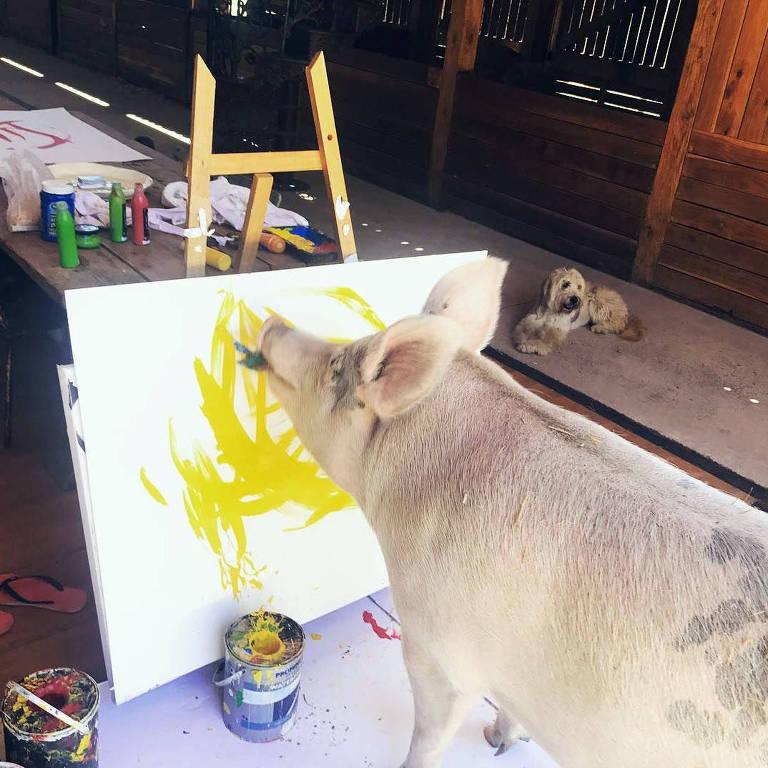 Pigcasso, a porca que pinta quadros
