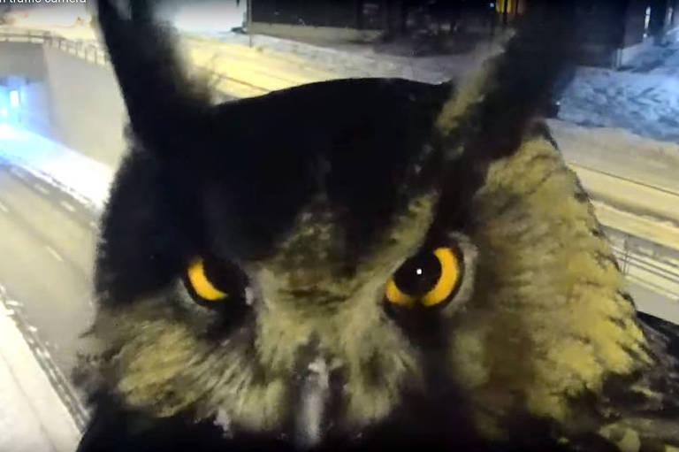 Coruja encara câmera de trânsito na Finlândia