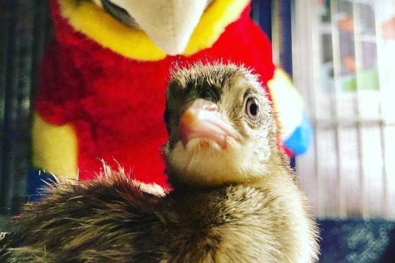 Luciano Huck compartilhou a foto do pequeno pavão em seu Instagram