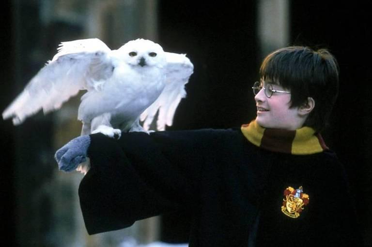 USP abre inscrições para curso sobre Harry Potter