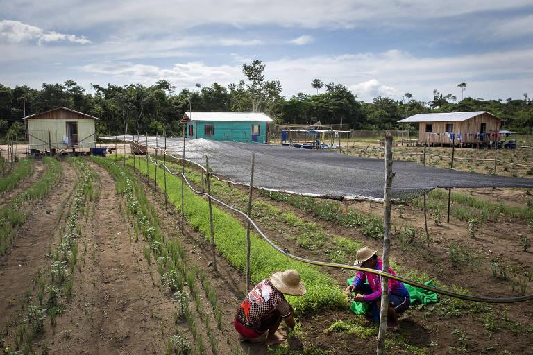 Plantação de coentro cultivada por ex-moradores de Catalão no terreno que agora ocupam, cedido pelo Incra