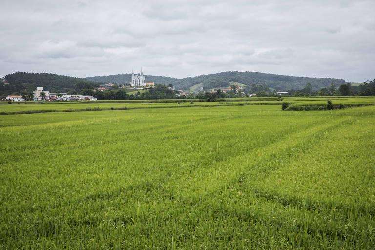 Plantação de arroz em Rio do Oeste, próximo ao rio Itajaí do Oeste
