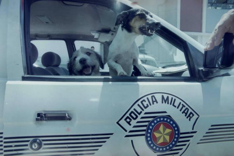 Cães Xuxa e Michelangelo, que impediram a fuga de presos em Guarulhos