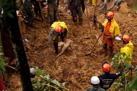 Bombeiros buscam, com a ajuda de um cão, sobreviventes de deslizamento em Petrópolis, em 2013
