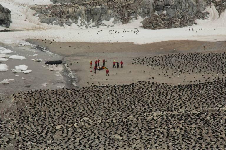 Imagem dos pesquisadores na colônia de pinguins-de-adélia