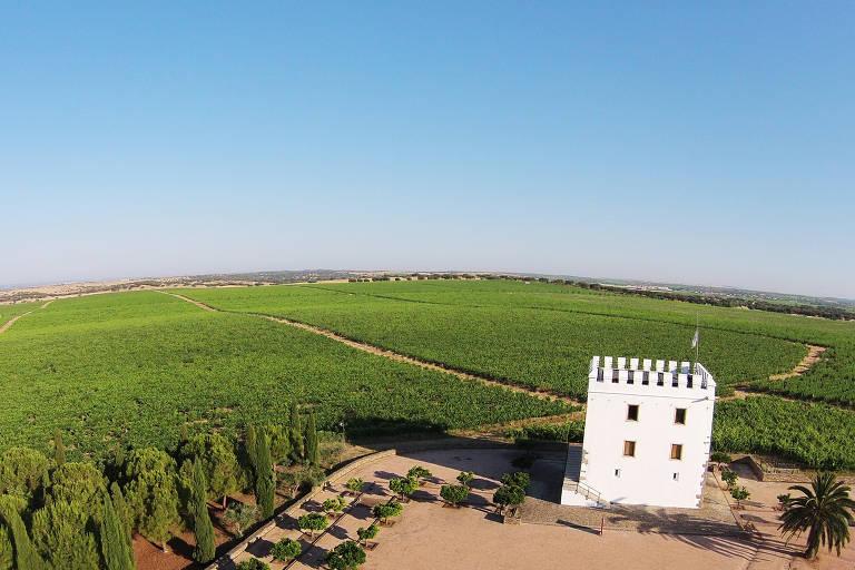 Vinhos e azeites em Portugal