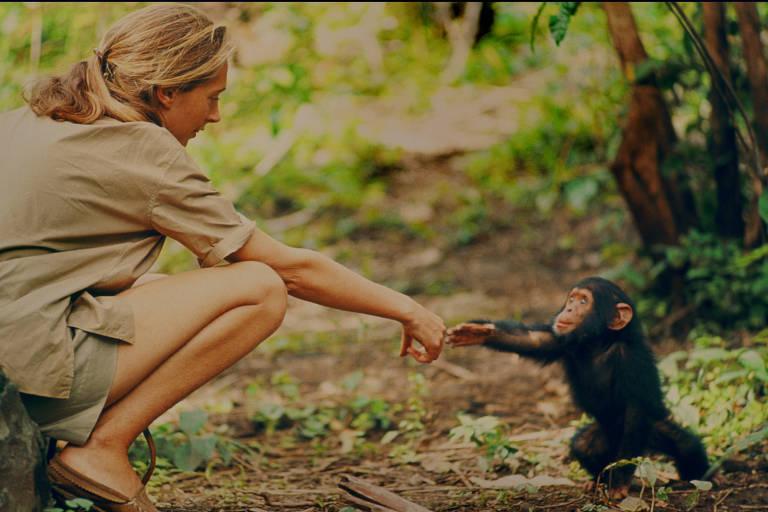 Jane Goodall e o chimpanzé Flint, na Tanzânia, em cena do documentário