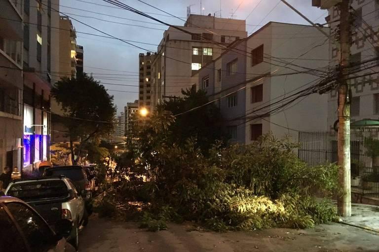Árvore cai e bloqueia rua Diana, em Perdizes, na zona oeste de São Paulo