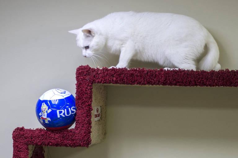 Aquiles, o gato vidente da Copa na Rússia