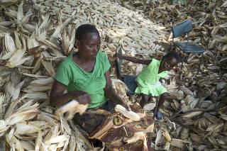 A worker processes corn on Agrippah Mutambara's farm on the outskirts of Bindura, Zimbabwe.