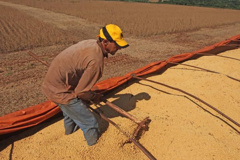 Trabalhador espalha soja em caminhão em Campo Mourão (PR)