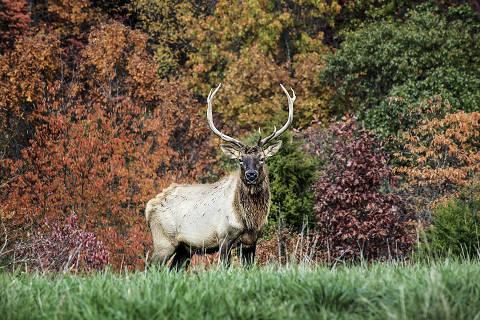Veado é visto no Dogwood Canyon Nature Park, no Missouri ORG XMIT: XNYT124