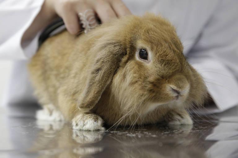 Símbolo da Páscoa, procura por coelhos aumenta nesta época do ano